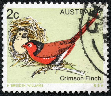 AUSTRALIA - CIRCA 1979  A stamp printed in Australia, shows the Crimson Finch  Neochmia phaeton , circa 1979