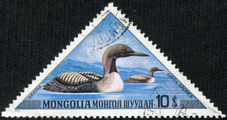 MONGOLIA - CIRCA 1973  A postage stamp printed in Mongolia shows Black-throated Loon - Gavia arctica, series, circa 1973 photo