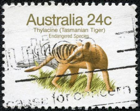 AUSTRALIA - CIRCA 1981  a stamp printed in the Australia shows Tasmanian Tiger, Tasmanian Wolf, Thylacinus Cynocephalus, Extinct Animal, circa 1981