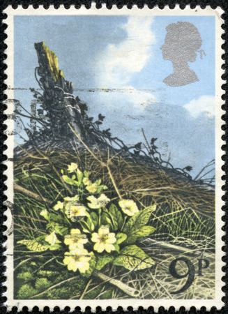 UNITED KINGDOM - CIRCA 1979: A stamp printed in Great Britain dedicates to British Flowers, shows Primrose, circa 1979