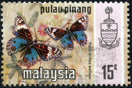 MALAYSIA - CIRCA 1976: A stamp printed in Malaysia shows image of a blue pansy (Precis orithya wallacei) butterfly, circa 1976 photo