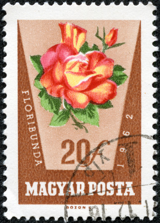 HUNGARY - CIRCA 1959: stamp printed by Hungary, shows flower rose, circa 1959 photo