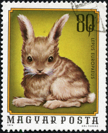 HUNGARY - CIRCA 1974  A stamp printed in Hungary shows image of a rabbit  lepus europaeus , circa 1974 photo