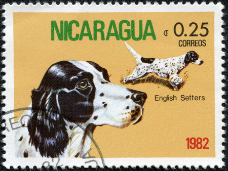 NICARAGUA - CIRCA 1982  A Stamp printed in NICARAGUA shows image of a English Setter from the series  Dogs , circa 1982