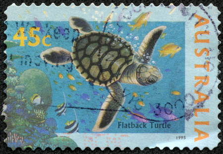 cooter: AUSTRALIA - CIRCA 1995  A Stamp printed in AUSTRALIA shows the Flatback Turtle,  The World Down Under  series, circa 1995