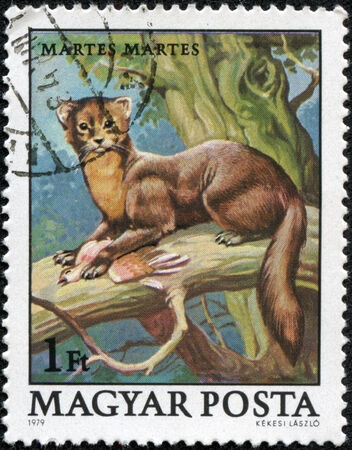philatelic: HUNGARY - CIRCA 1979  A stamp printed in Hungary shows European Pine Marten  Martes martes , with the same inscriptions, from the series  Wildlife Protection , circa 1979
