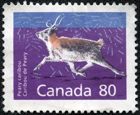 CANADA - CIRCA 1990  a stamp printed in the Canada shows Peary Caribou, Rangifer Tarandus Pearyi, Animal, circa 1990