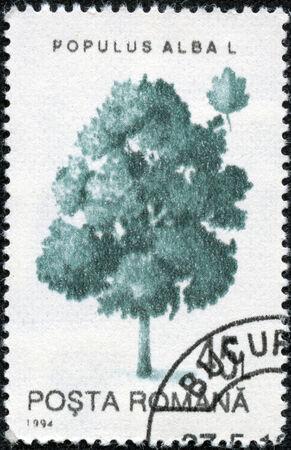 "poplar: ROMANIA - CIRCA 1994: A stamp printed in Romania shows White Poplar (Populus alba), with the same inscription, from the series  ""Trees "", circa 1994"