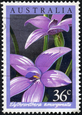 notched: AUSTRALIA - CIRCA 1986: a stamp printed in the Australia shows The Notched Elythranthera, Elythranthera Emarginata, Orchid, circa 1986 Stock Photo
