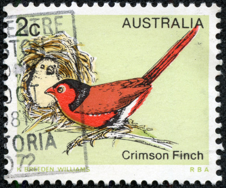 A stamp printed in Australia, shows the Crimson Finch (Neochmia phaeton), circa 1979 photo