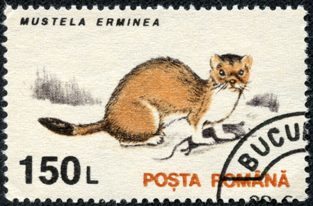 stoat: ROMANIA - CIRCA 1993: A stamp printed in the Romania, shows the Stoat (Mustela erminea), circa 1993