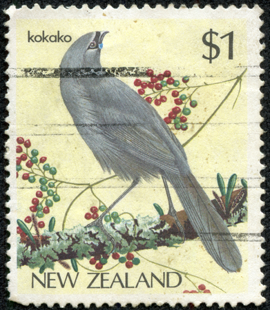 NEW ZEALAND - CIRCA 1985: Postage stamp printed in New Zealand with image of an endangered Kokako bird perched on a tree branch.circa 1993. photo