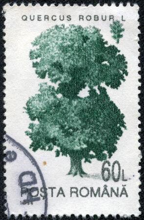quercus: ROMANIA - CIRCA 1994: A stamp printed in Romania shows Common Oak (Quercus robur), with the same inscription, from the series Trees, circa 1994