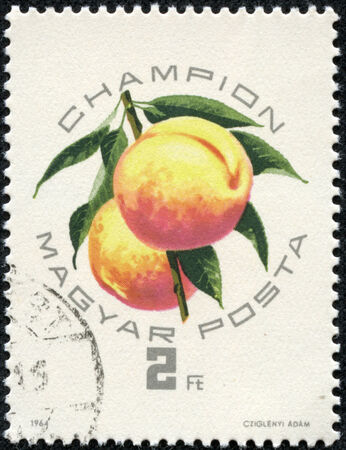 postmail: HUNGARY - CIRCA 1964: A post stamp printed in Hungary shows artwork of apricots, honoring fruit exposition at Szeged, Hungary, circa 1964 Stock Photo