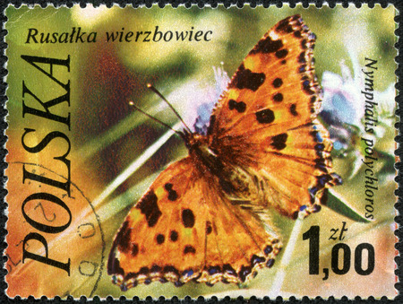 POLAND - CIRCA 1977: A stamp printed in Poland shows butterfly Numphalis polychloros, with the same inscription, from the series Butterflies&a mp, circa 1977. photo