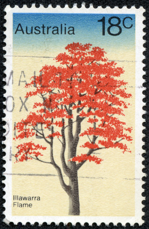 malvales: AUSTRALIA - CIRCA 1978: A stamp printed in Australia from theTrees issue shows Illawarra Flame Tree, circa 1978. Stock Photo
