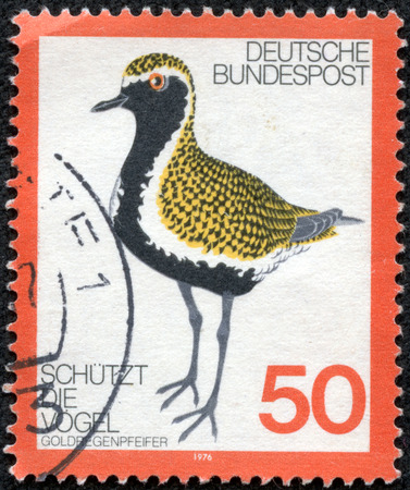 GERMANY - CIRCA 1976: Postage stamp printed in Germany, dedicated to the protection of birds, depicted Golden Plover, circa 1976 Editorial