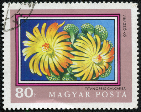 magyar: post stamp printed in Hungary (Magyar) shows titanopsis calcarea from plants series, Scott catalog 2091 A468 80f blue green yellow pink, circa 1971
