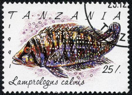 philatelic: TANZANIA - CIRCA 1991: A stamp printed in Tanzania shows Lamprologus calvus, circa 1991