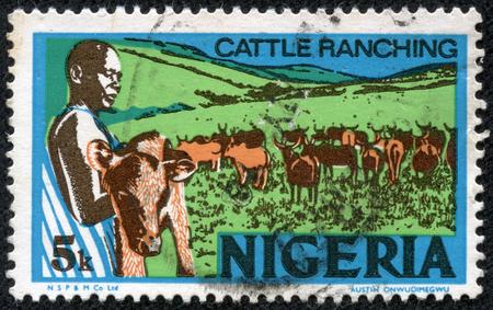 ranching: NIGERIA - CIRCA 1973: sello impreso por Nigeria, muestra al joven nigeriano, la celebraci�n de un ternero, la cr�a de ganado, alrededor de 1973 Editorial
