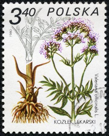 """medical  plant: POLONIA - CIRCA 1980: Un sello impreso en Polonia muestra Valeriana officinalis, con la misma inscripci�n, de la serie """"Planta M�dica"""", alrededor de 1980"""