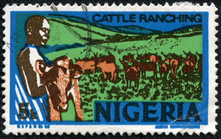 ranching: NIGERIA - CIRCA 1973: stamp printed by Nigeria, shows young nigerian, holding a calf, cattle ranching, circa 1973