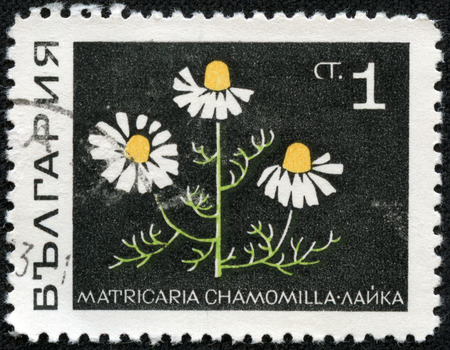 chamomilla: BULGARIA - CIRCA 1969: post stamp printed in Bulgaria shows Camomile (matricaria chamomilla, chamomile) flower from herbs series, Scott catalog 1729 A717 1s black green yellow white, circa 1969 Stock Photo