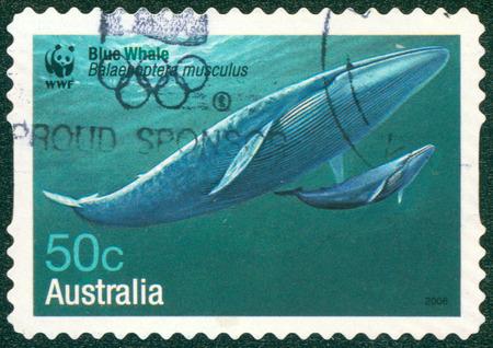 musculus: AUSTRALIA - CIRCA 2006: A stamp printed in Australia shows Blue Whale - Balaenoptera musculus, circa 2006 Editorial