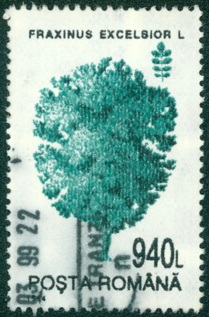 excelsior: ROMANIA - CIRCA 1994: Postage stamp printed in Romania shows a tree Common Ash (Fraxinus excelsior), circa 1994