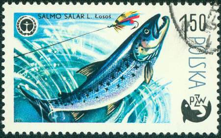 ichthyology: POLAND - CIRCA 1979: A stamp printed in Poland, shows fish Salmon, from the series Centenary of Polish Angling, circa 1979