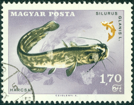 HUNGARY - CIRCA 1963: A stamp printed in Hungary Showing wels catfish, Silurus glanis, circa 1963
