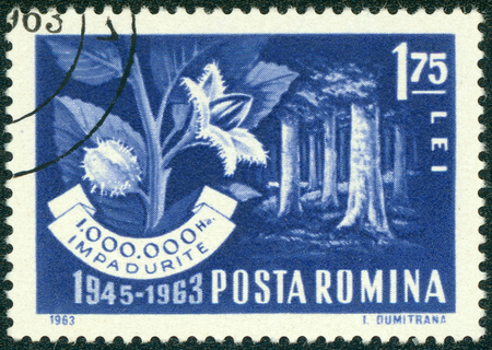 reforestation: ROMANIA - CIRCA 1963: a stamp printed in the Romania shows Beech Forest and Branch, Reforestation Program, circa 1963 Stock Photo