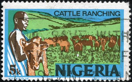 ranching: NIGERIA - CIRCA 1973: sello impreso por Nigeria, muestra al joven nigeriano, la celebraci�n de un ternero, la cr�a de ganado, alrededor de 1973 Foto de archivo