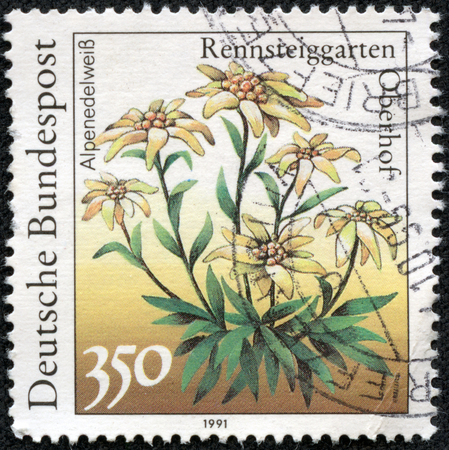 Stamp printed Germany shows Alpenedelweiss Leontopodium in nivale Stock Photo