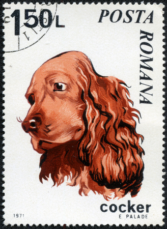 Stamp Printed in Romania dated 1971 depicting a Cocker Spaniel Dog circa 1971