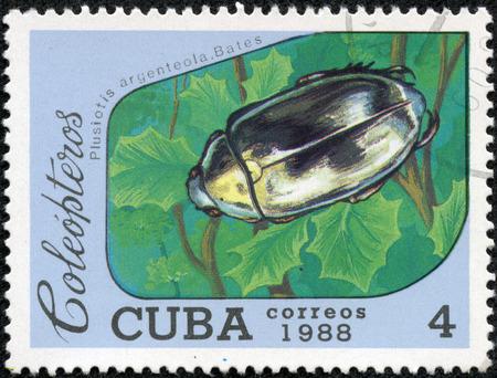 Stamp printed in shows of a Plusiotis argenteola Dales Coba image beetle