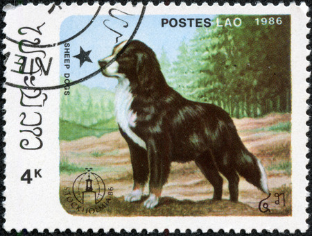 CHONGQING, CHINA - May 10, 2014:A stamp printed in LAOS shows Bernese Mountain Dog, from series Breeds of dogs, circa 1986