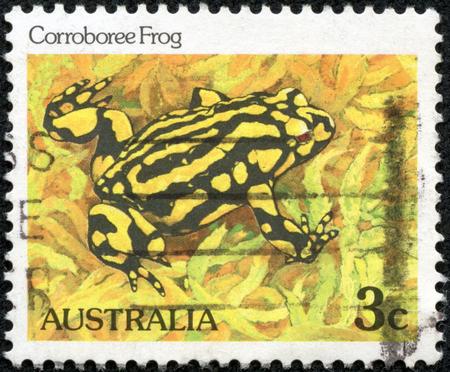 オーストラリア - CIRCA 1981:「野生生物」号からオーストラリアで印刷された切手は、1981年頃のコロボリーカエルを示しています。