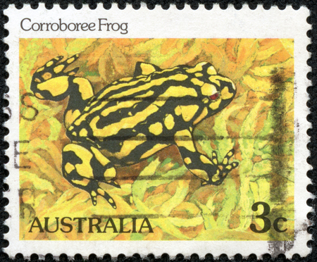 AUSTRALIA - CIRCA 1981: A stamp printed in Australia from the Wildlife issue shows a Corroboree frog, circa 1981.