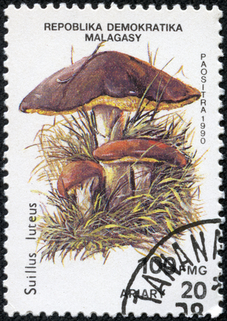 CHONGQING, CHINA - May 10, 2014:A stamp printed in Madagascar shows the edible Slippery Jack Mushroom, Suillus luteus, also known as the Sticky Bun mushroom, circa 1990.