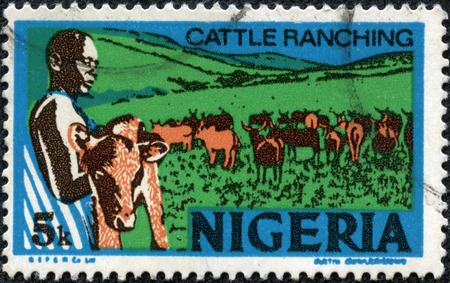 重慶, 中国 - 5 月 10 日、ナイジェリア、2014:stamp 印刷を示しています若いナイジェリアの 1973 年頃、牧場の牛、子牛を保持