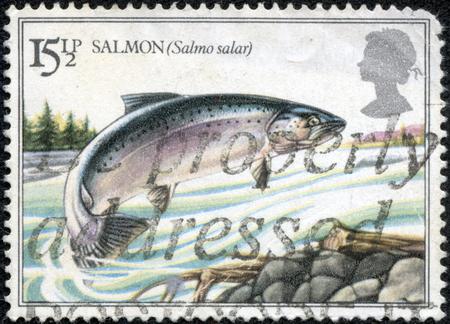 CHONGQING, CHINA - May 10, 2014:A stamp printed in United Kingdom shows jumping salmon, series British River Fishes, circa 1983