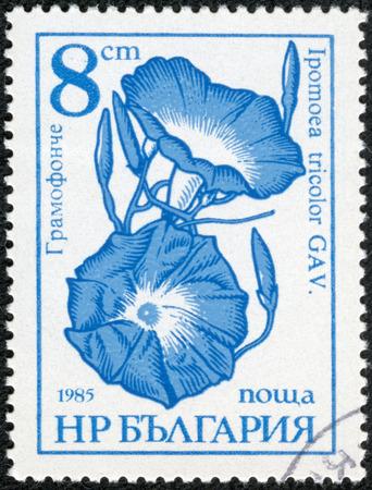 ブルガリアの印刷スタンプ「庭の花」は、1985年年頃一連画像が表示されます。
