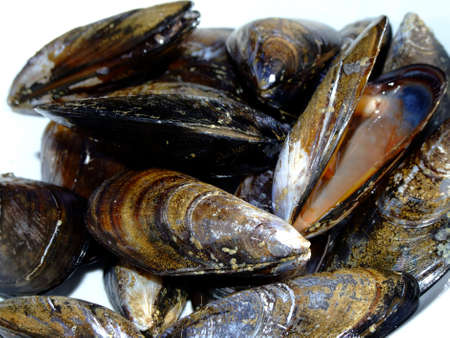 Dish of fresh mussels