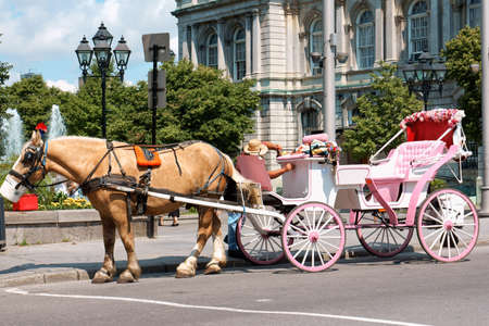 Montreal, Canada - July 26, 2008: glimpse of downtown Montreal (Vieux) in summer. A one-horse gig waiting for turists in front of Montreal City Hall (Hôtel de Ville de Montréal). Some people around. Stock Photo - 19326373