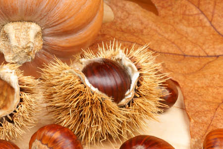 Autumn still life with pumpkin and chestnuts on a wooden background photo