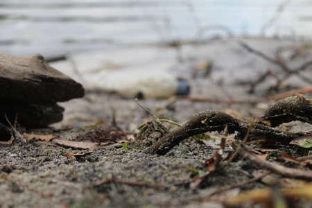 dirty lake Zdjęcie Seryjne