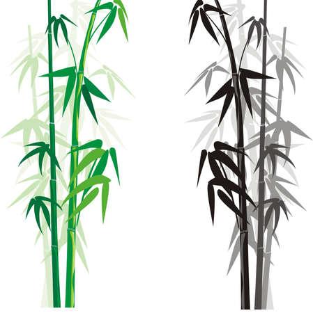 bambú (bambusa) Ilustración de vector