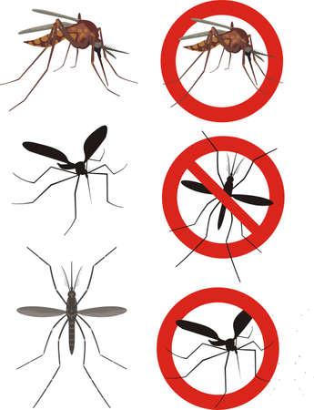 moscerino: zanzara, zanzare (culex) Vettoriali