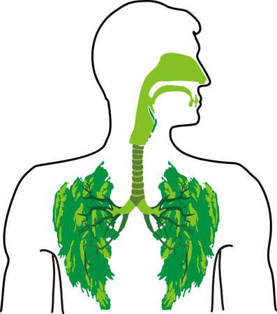 オープンエア: オープンエアの - 緑の肺  イラスト・ベクター素材